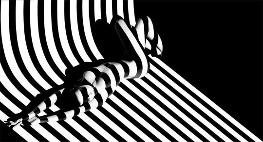 francis-giacobetti-zebra-01.jpg