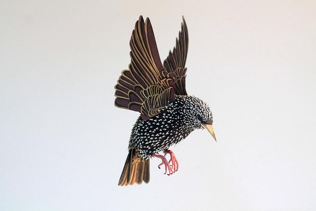 birds-71.jpg