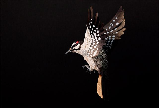 birds-41.jpg