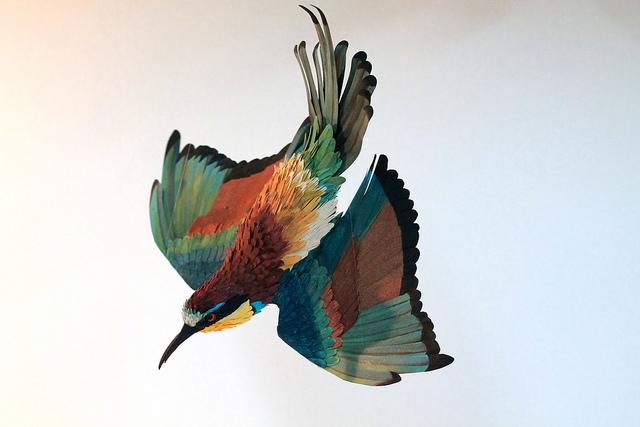 birds-61.jpg