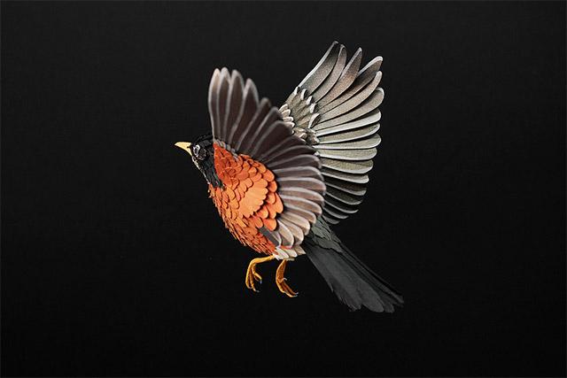birds-31.jpg