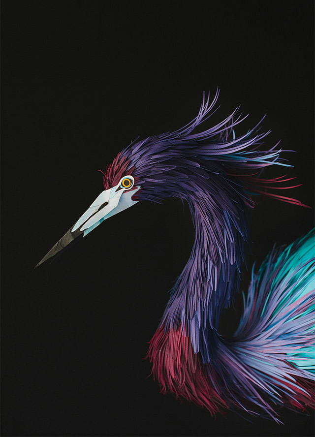 birds-11.jpg