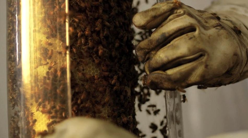 Bee_04.jpg