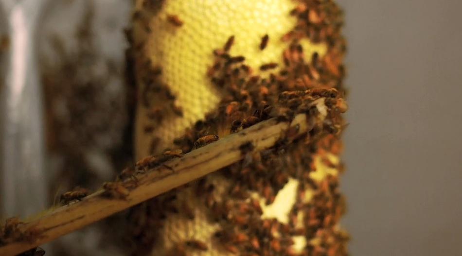 Bee_05.jpg