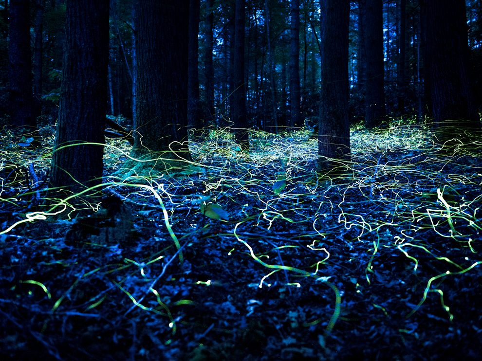 fireflies-forest-north-carolina_70949_990x742.jpg