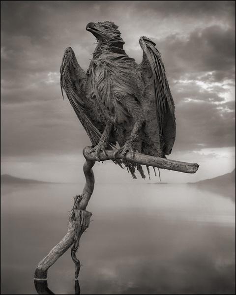 Calcified-Fish-Eagle.jpeg