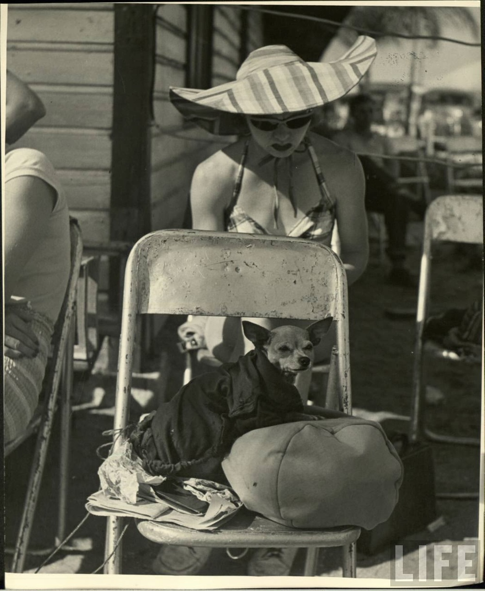 Daily Life of Circus Girls in Sarasota, Florida, ca. 1949 (2).jpeg