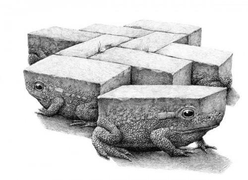 bizarre-animal-2-500x362.jpg