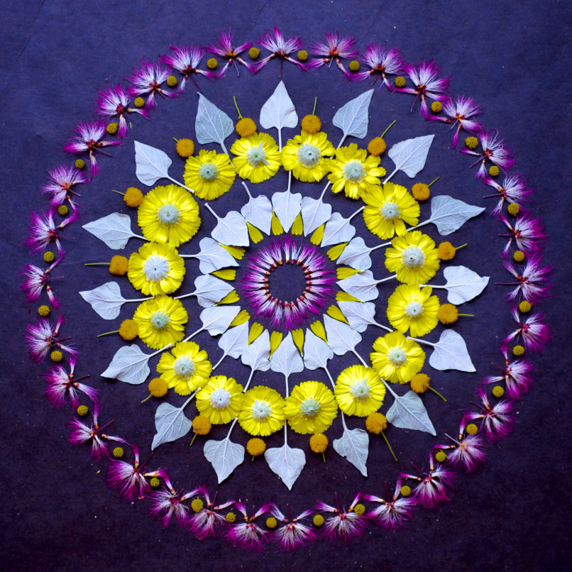 danmala569-sonoran-desert-wildflowers.jpg