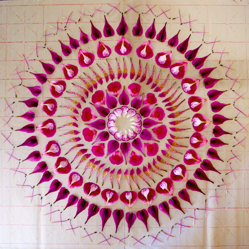 danmala544carnation-alstroemeria-godetia.jpg