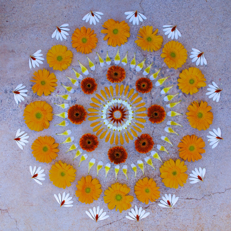 danmala565gerbera-daisy-primrose-alstroemeria.jpg