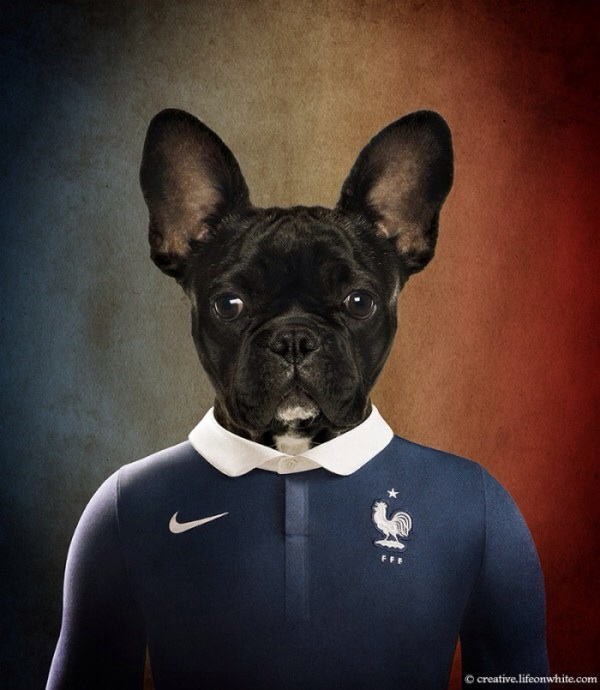France - French Bulldog