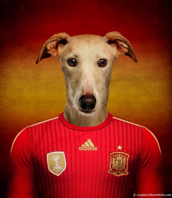 Spain - Spanish Galgo