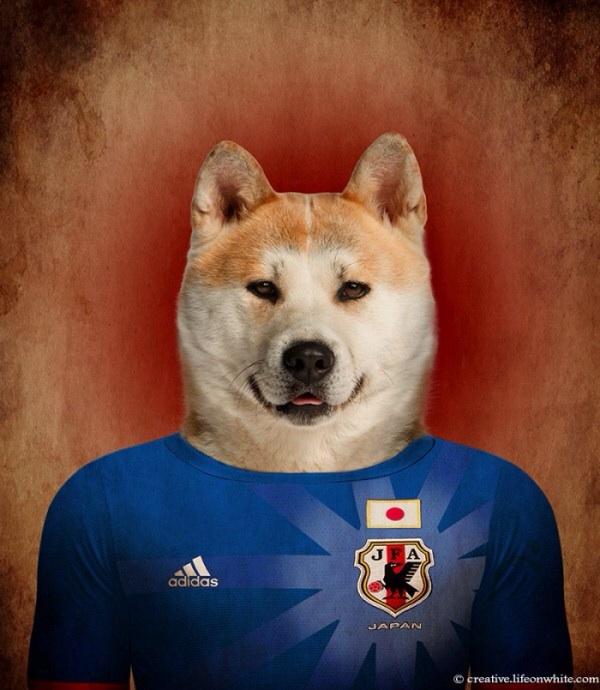 Japan - Shibu Inu