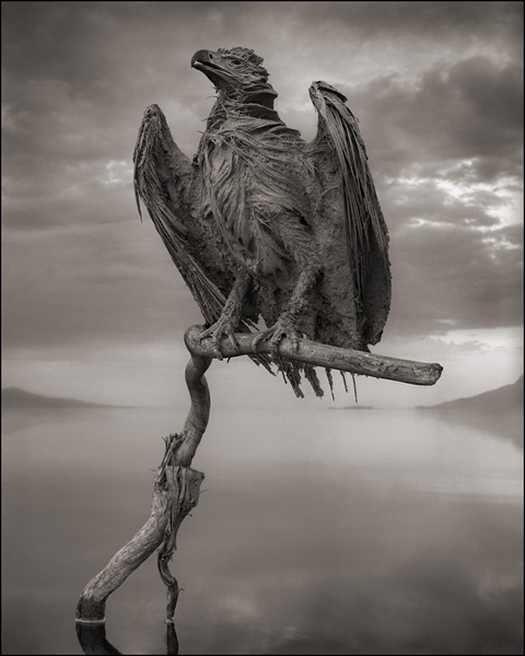 Nick Brandt's Stunning Photos of Birds Calcified by Lake Natron's Alkaline Waters