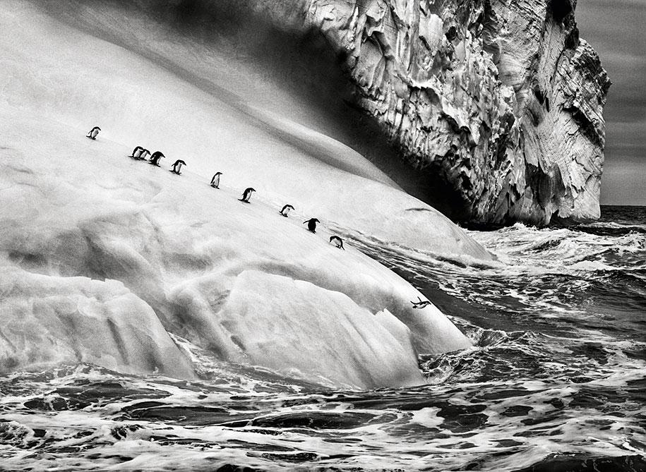 Icebergs between the Zavodovski and Visokoi islands in the South Sandwich Islands, near Antarctica (2009)