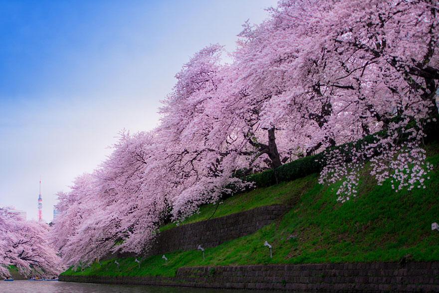 photo credits:  Hikaruno Mikoto