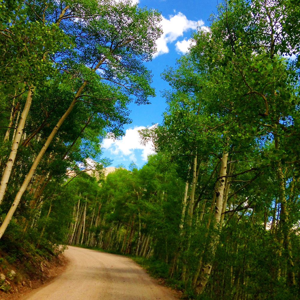 Aspen groves. Breckenridge, Colorado, USA Photo by Twenty20/ Jawill529