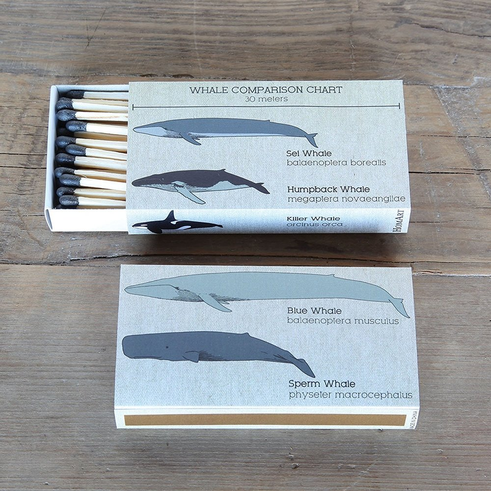 Whale Chart Matches Match Box Set of 2