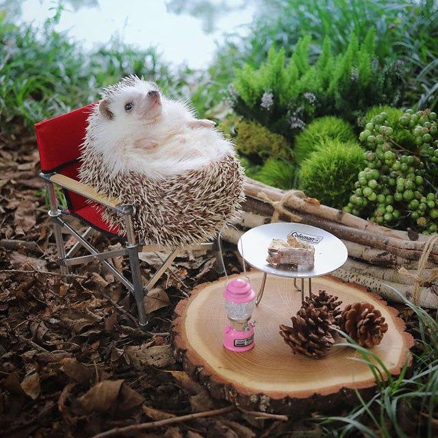 hedgehog-azuki-goes-on-camping-trip-2.jpg