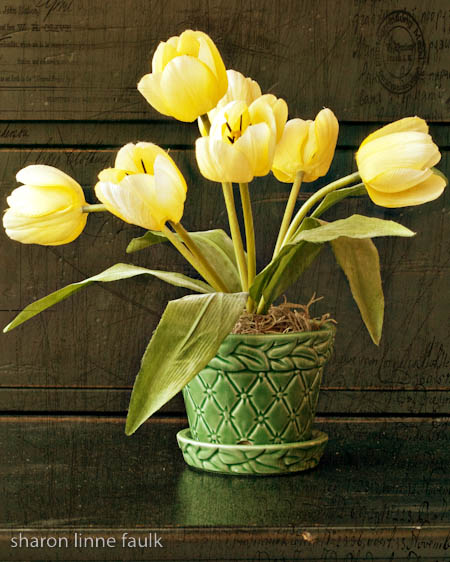 slf yellowtulips.jpg