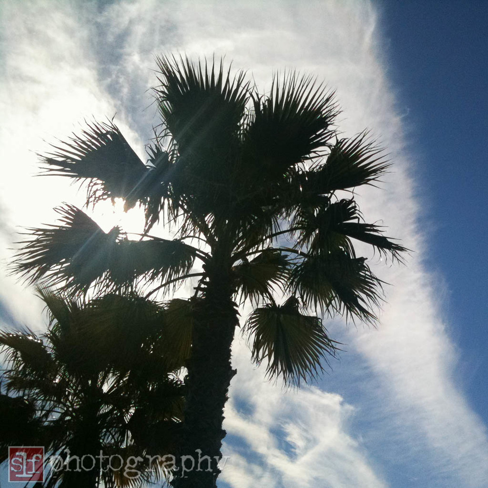 washingtonian palm, 2010