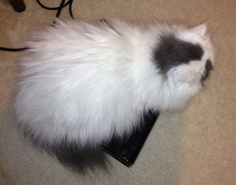 White Fluffy Kitty sitting on top of my Xbox 360 S.