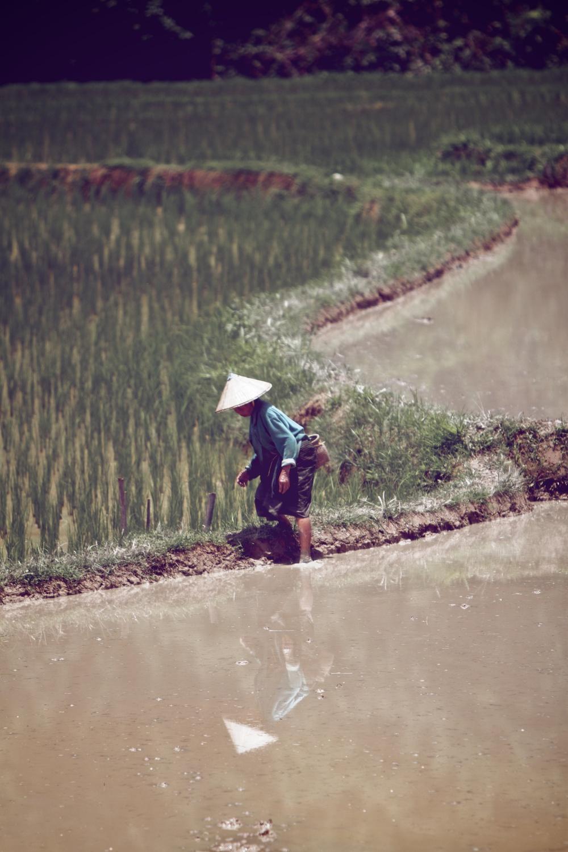 muddy rice field.jpg
