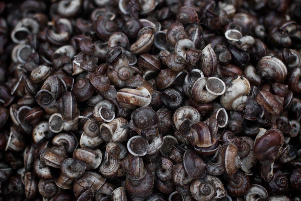 Snails for sale.jpg
