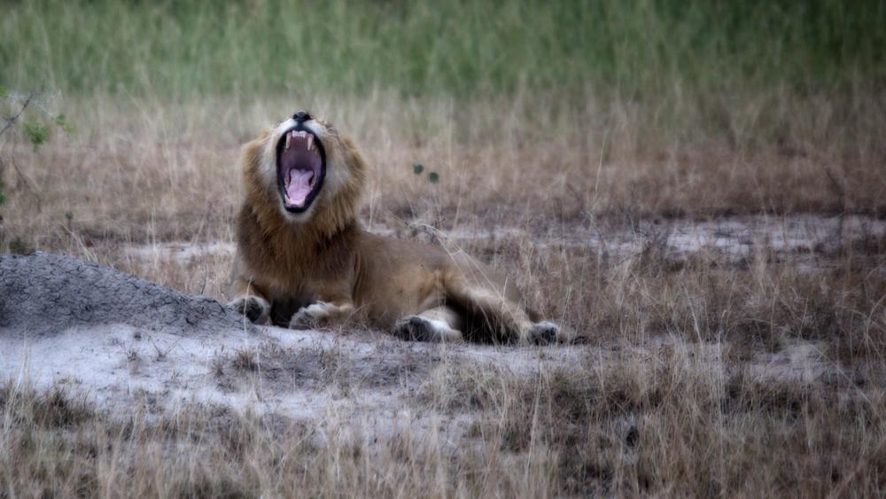 a yawn.jpg