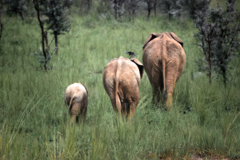 Elphant walk.jpg