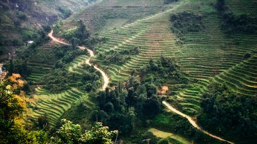 Terraced rice patties in Sapa, Vietnam