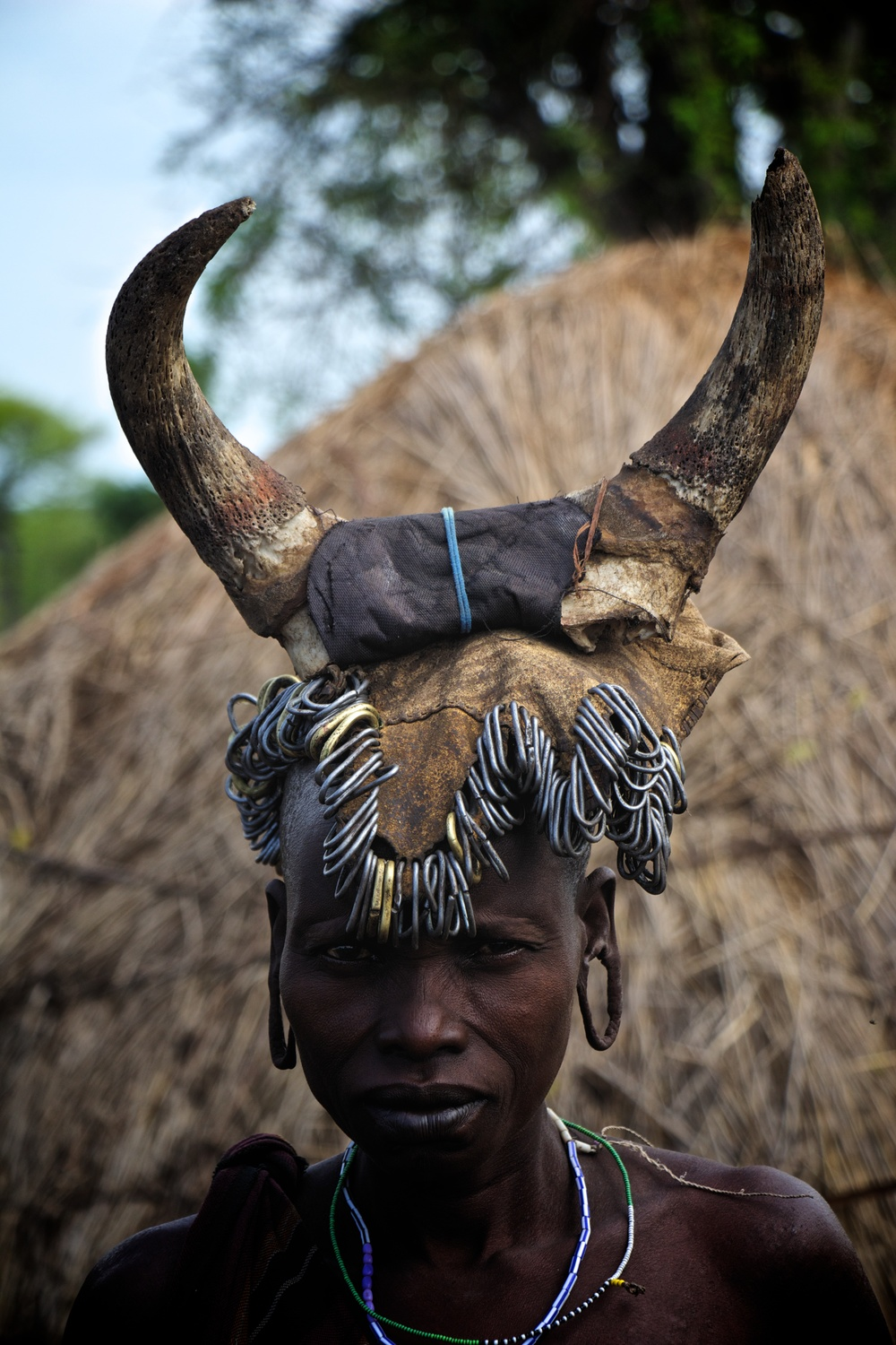 Cattle headdress