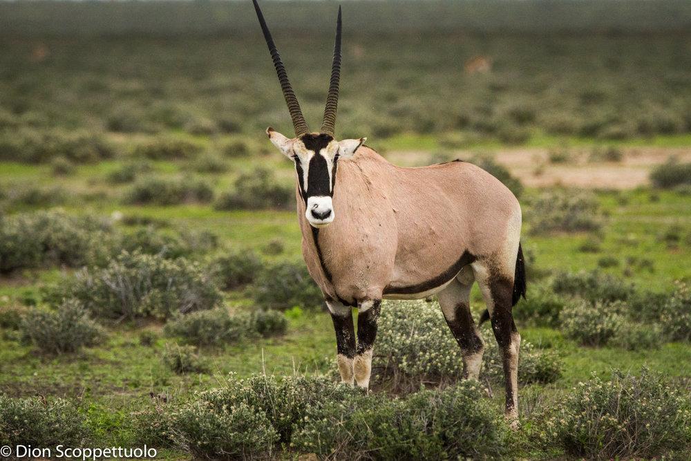 Namibia-42.jpg