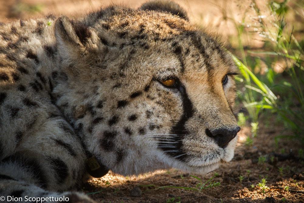 Namibia-111.jpg