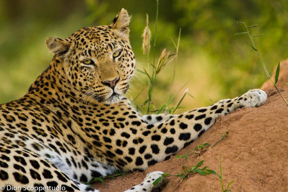 Namibia-118.jpg