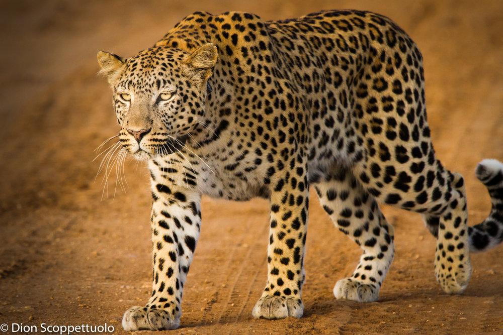Namibia-119.jpg