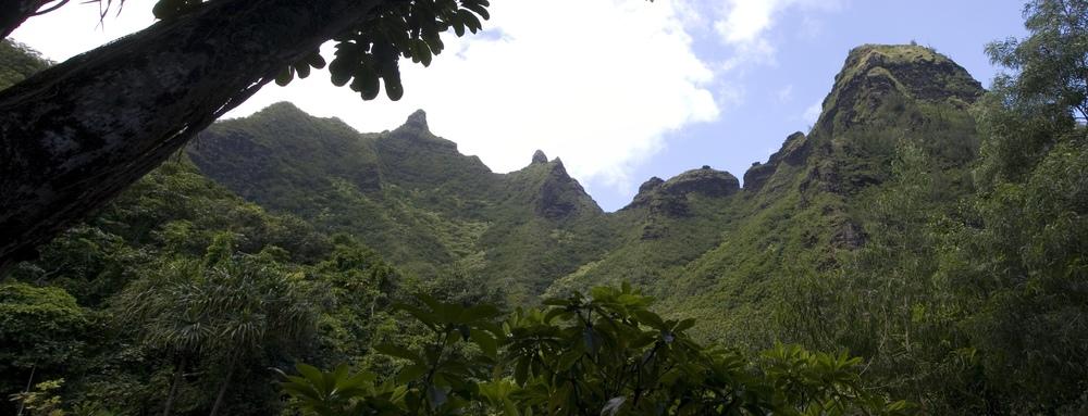 Botanical_Panorama1.jpg