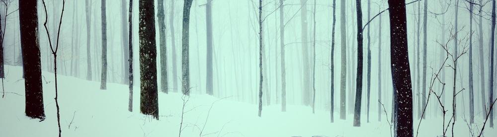 StoweTrees-01_HiCon.jpg