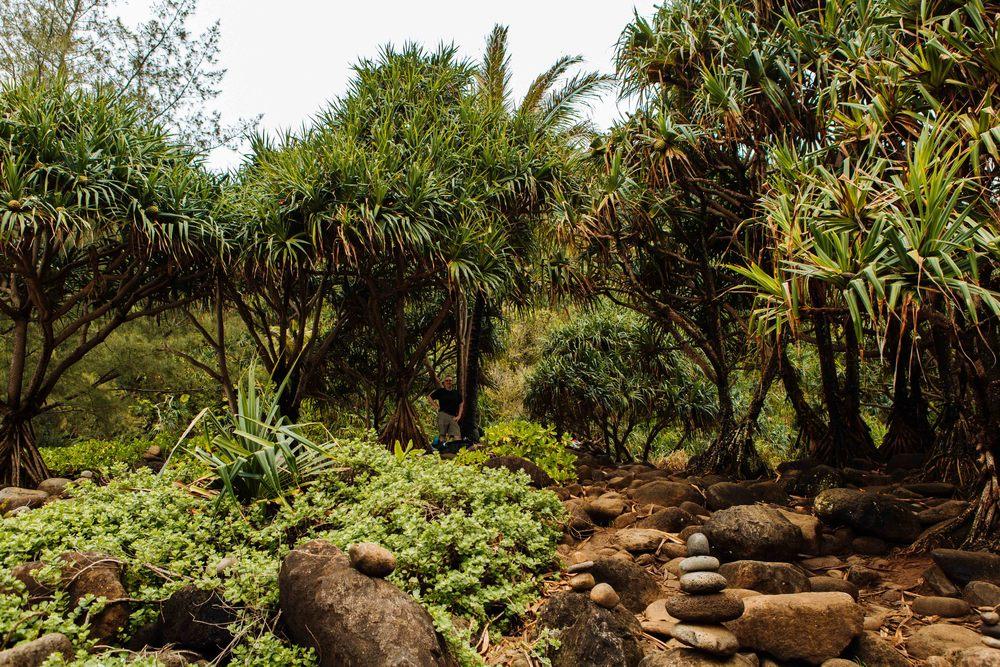 Kauai_day2_-188-2.jpg