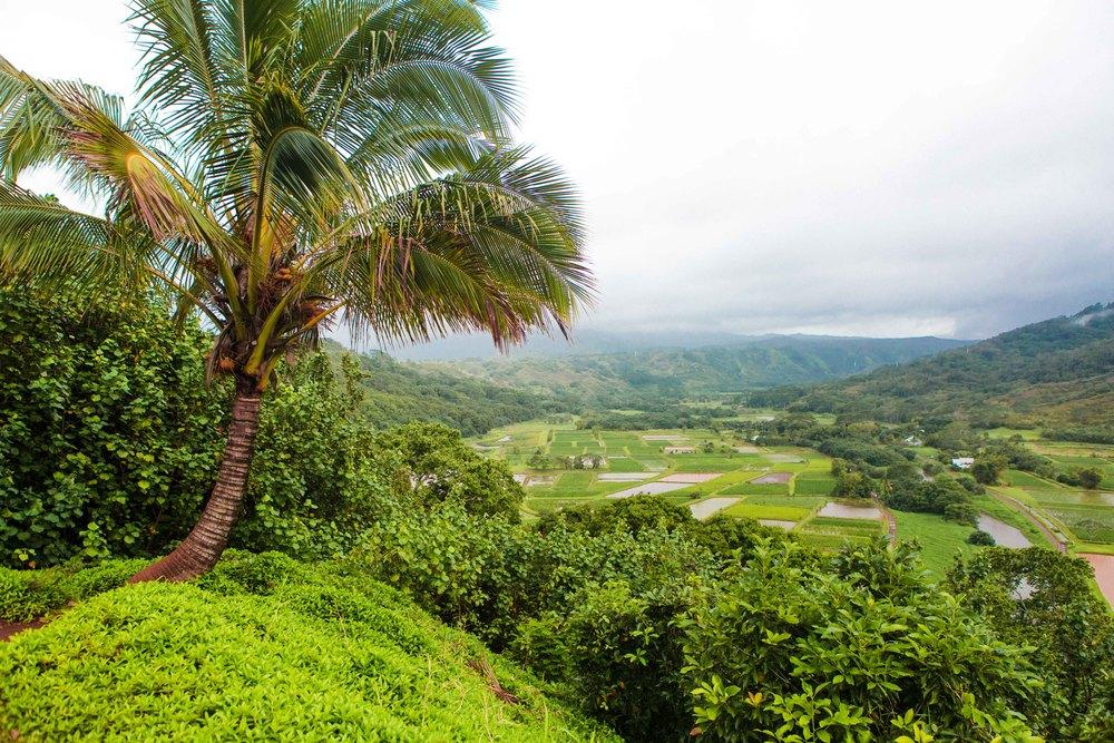 Kauai_day3)-826-2.jpg