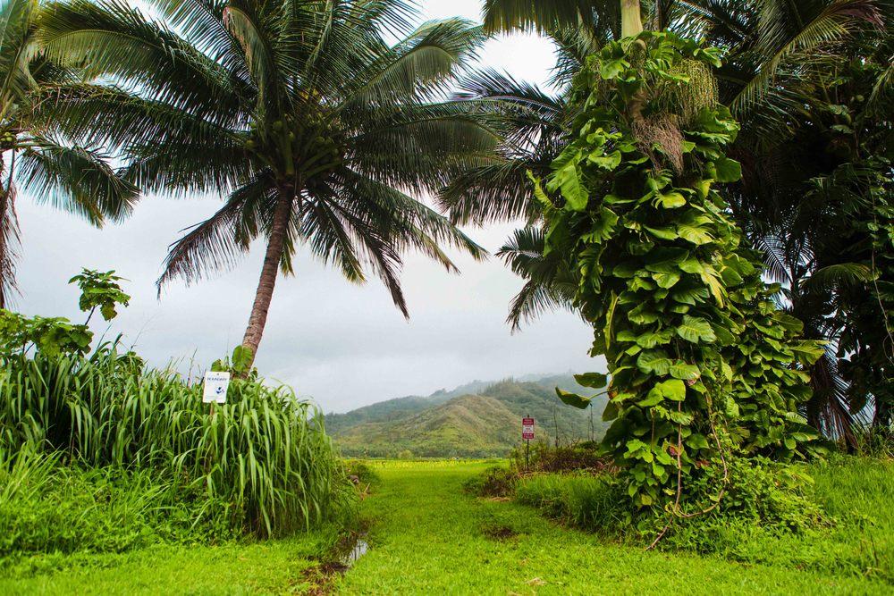 Kauai_day3)-912-2.jpg