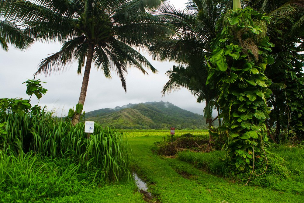 Kauai_day3)-940-2.jpg
