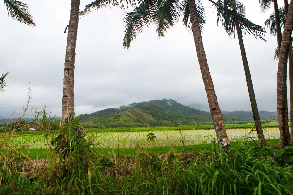 Kauai_day3)-950-2.jpg