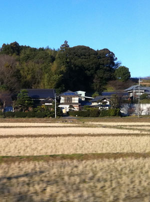 Rice fields lie in wait for the next Spring planting.