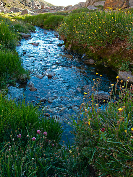 Wildflowers and a mountain stream just below Chasm Lake.