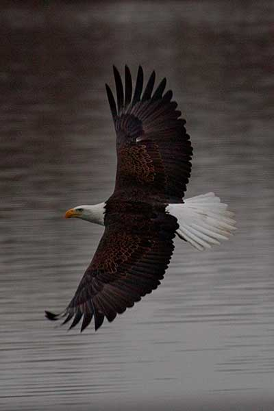 In flight over the lake.