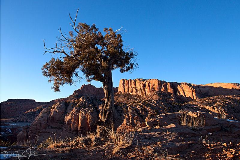 In Navajo territory, a few miles southwest of Kayenta, AZ.