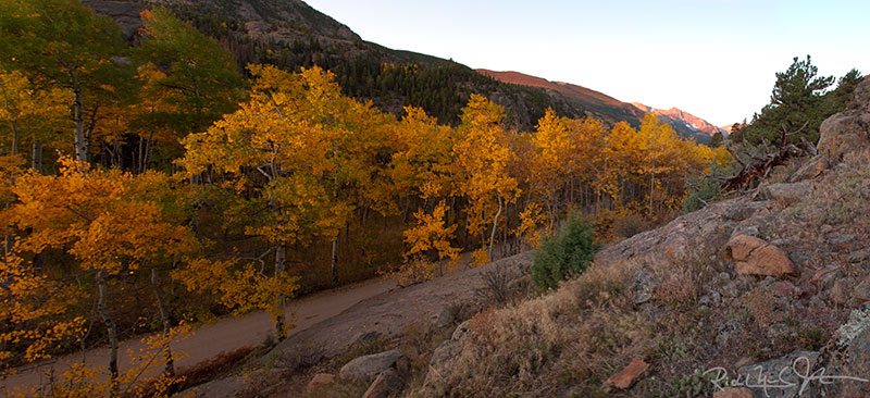 Aspens at sunrise along Fern Lake Road, Rocky Mountain National Park.