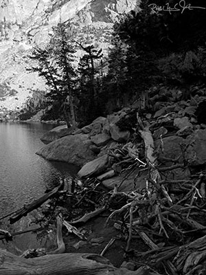 Dead wood along the margin of Emerald Lake, pin black-and-white.